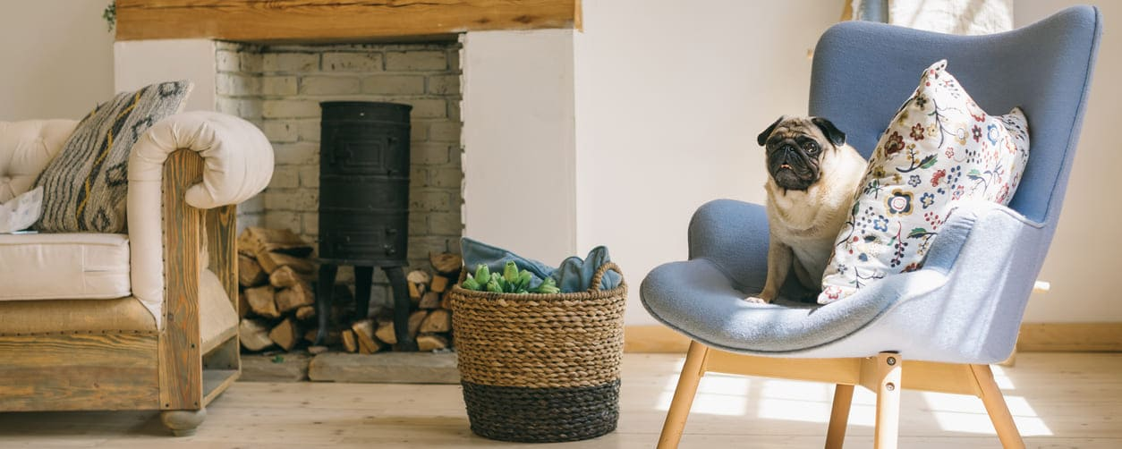 dog sitting on chair in eco-cleaned home lounge